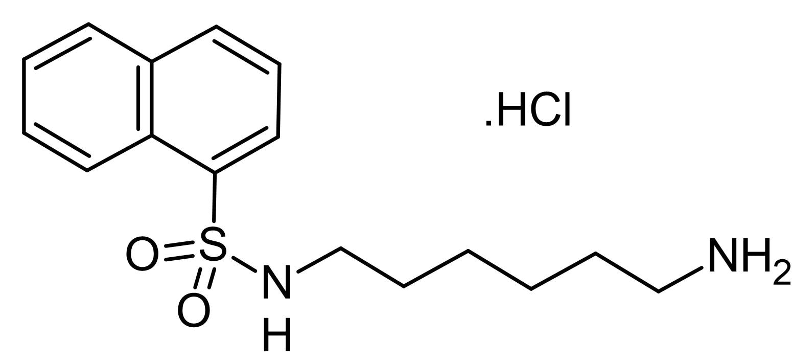 Chemical Structure - W-5, calmodulin inhibitor (ab143770)