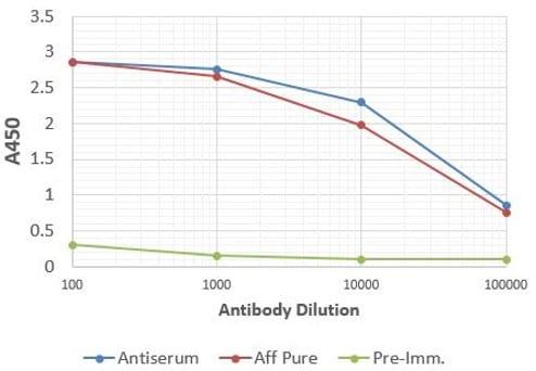 ELISA - Anti-Aquaporin 1 antibody (ab15080)