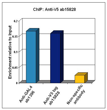 ChIP - Anti-V5 tag antibody (ab15828)