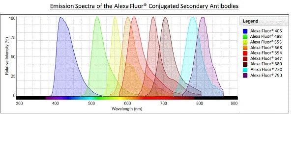 Alexa Furor®-山羊抗小鼠IgG H&L(Alexa For For®488)预吸附(AB150 117)