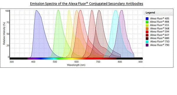 Alexa Fluor® - Donkey F(ab')2 Anti-Goat IgG H&L (Alexa Fluor® 555) preadsorbed (ab150138)