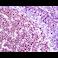 Immunohistochemistry (Formalin/PFA-fixed paraffin-embedded sections) - Anti-HDAC1 antibody [EPR5517(2)] (ab150399)
