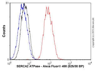 Flow Cytometry - Anti-SERCA2 ATPase antibody [EPR9392] (ab150435)