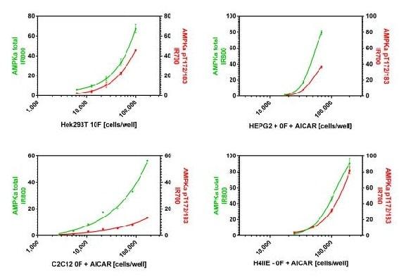 Dynamic range of AMPKa total and pT172