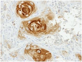 Immunohistochemistry (Formalin/PFA-fixed paraffin-embedded sections) - Anti-APPBP2 antibody (ab151305)