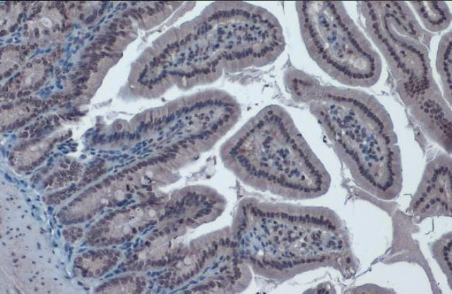 Immunohistochemistry (Formalin/PFA-fixed paraffin-embedded sections) - Anti-KAT5 / Tip60 antibody (ab151432)