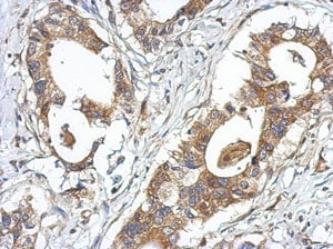 Immunohistochemistry (Formalin/PFA-fixed paraffin-embedded sections) - Anti-GPRASP2 antibody - C-terminal (ab151585)