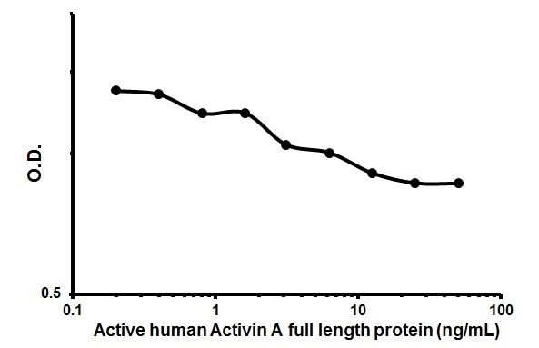Functional Studies - Recombinant human/mouse/rat Activin A protein (ab151687)