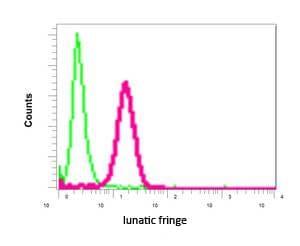 Flow Cytometry - Anti-Lunatic Fringe antibody [EPR10391(B)] (ab151699)