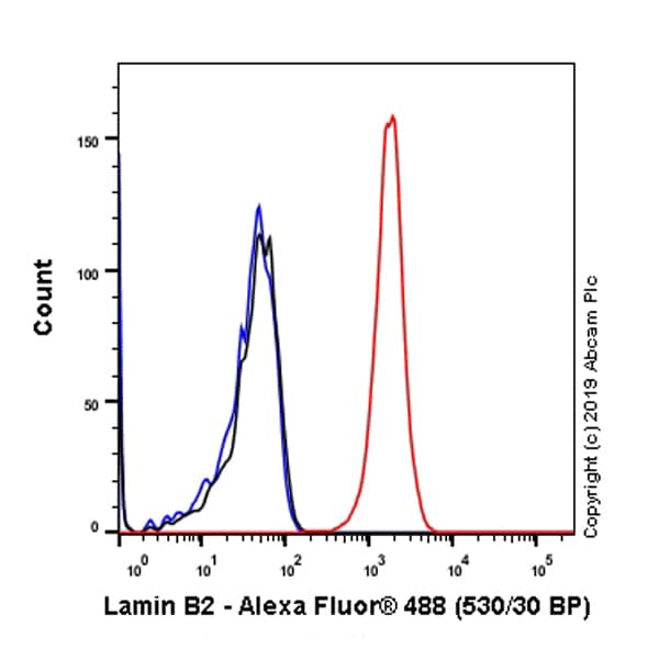 Flow Cytometry - Anti-Lamin B2 antibody [EPR9701(B)] (ab151735)