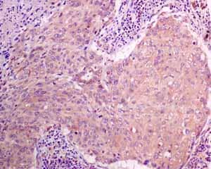 Immunohistochemistry (Formalin/PFA-fixed paraffin-embedded sections) - Anti-MGT4A antibody [EPR10034] (ab151750)