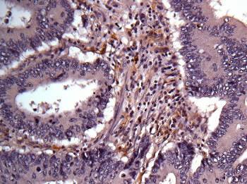 Immunohistochemistry (Formalin/PFA-fixed paraffin-embedded sections) - Anti-Aldose reductase antibody (ab153897)