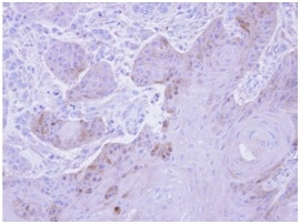 Immunohistochemistry (Formalin/PFA-fixed paraffin-embedded sections) - Anti-GSTM5 antibody (ab154018)