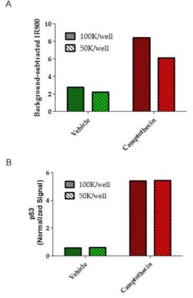 In-Cell ELISA - Anti-p53 antibody [9D3DE3] (ab154036)