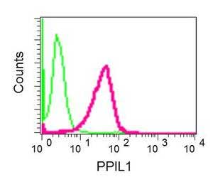 Flow Cytometry - Anti-PPIL1 antibody [EPR10251] (ab154188)