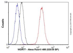 Flow Cytometry - Anti-WDR77 antibody [EPR10708(B)] (ab154190)