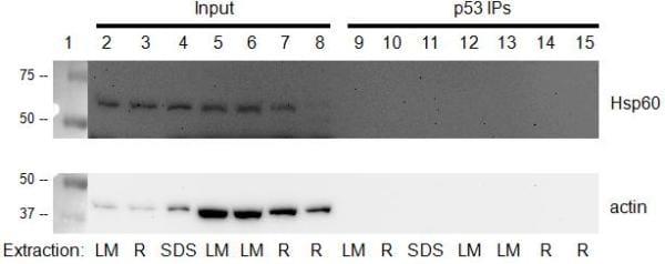 Figure 2: p53 immunocapture kit (ab154470)
