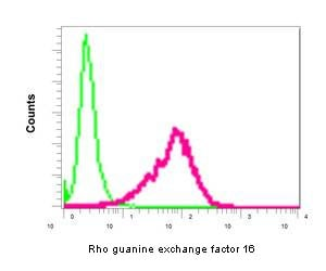 Flow Cytometry (Intracellular) - Anti-Rho guanine exchange factor 16/NBR antibody [EPR9950] (ab154785)