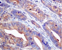 Immunohistochemistry (Formalin/PFA-fixed paraffin-embedded sections) - Anti-UGPase antibody [EPR10627(B)] (ab154817)