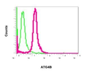 Flow Cytometry - Anti-ATG4B antibody [EPR6436(2)] (ab154843)