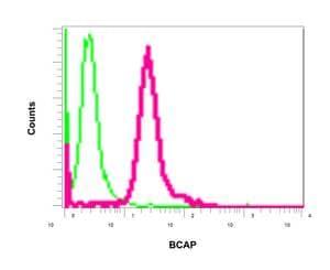 Flow Cytometry (Intracellular) - Anti-PHF11 antibody [EPR10910] (ab155077)