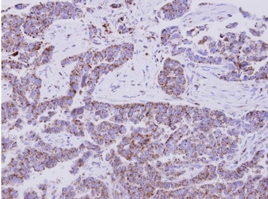 Immunohistochemistry (Formalin/PFA-fixed paraffin-embedded sections) - Anti-EIF1AY antibody (ab155546)