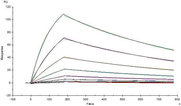 Functional Studies - Recombinant human EGFR protein (ab155639)