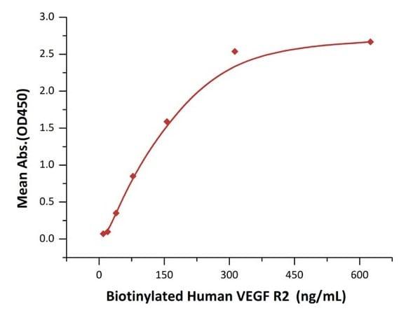 Functional Studies - Recombinant human VEGFA protein (Active) (ab155740)