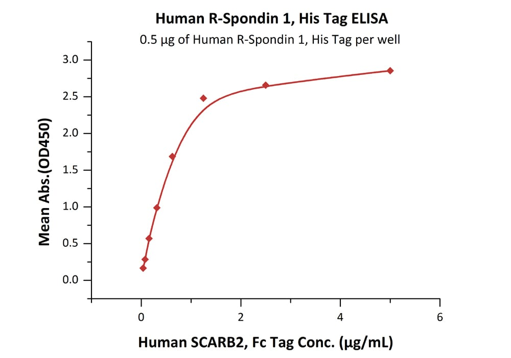Functional Studies - Recombinant human RSPO1 protein (ab155744)