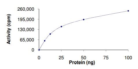 Functional Studies - Recombinant human ERK2 protein (ab155812)