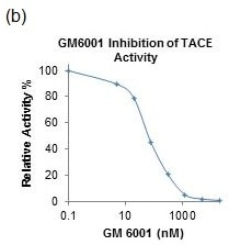 GM6001 Inhibition of TACE Activity