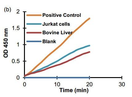 Phosphoglucomutase activity in positive controls
