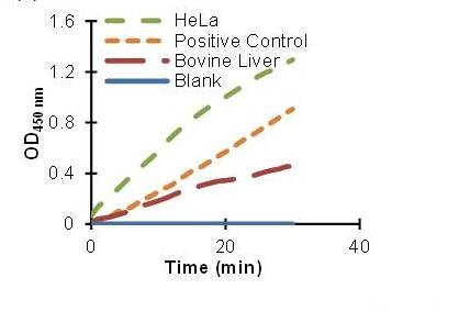 Phosphofructokinase activity using ab155898