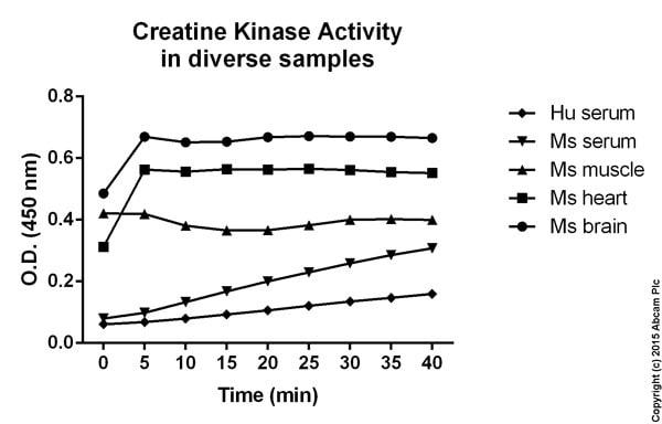 Functional studies - Creatine Kinase Activity Assay Kit (ab155901)