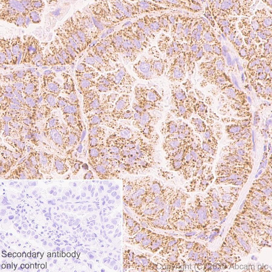 Immunohistochemistry (Formalin/PFA-fixed paraffin-embedded sections) - Anti-PDHB antibody [EPR11097(B)] (ab155996)