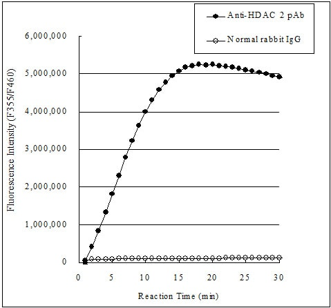 ab156064 - Histone Deacetylase (HDAC) Activity Assay Kit (Fluorometric)