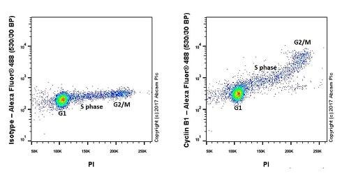 Flow Cytometry - Anti-Cyclin B1 antibody [Y106] - BSA and Azide free (ab156447)