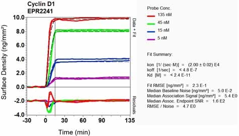 OI-RD Scanning - Anti-Cyclin D1 antibody [EPR2241] - BSA and Azide free (ab156448)