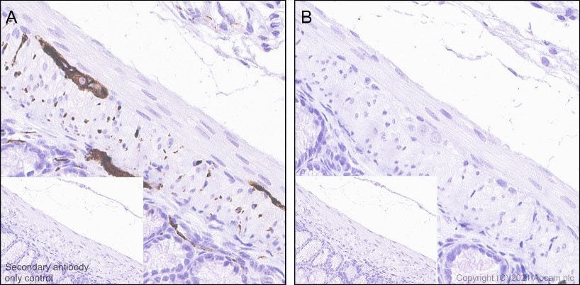 Immunohistochemistry (Formalin/PFA-fixed paraffin-embedded sections) - Anti-Tau (phospho S396) antibody [EPR2731] - BSA and Azide free (ab156623)