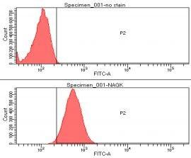 Flow Cytometry - Anti-N acetylglucosamine kinase  antibody [AT4D12] (ab156651)