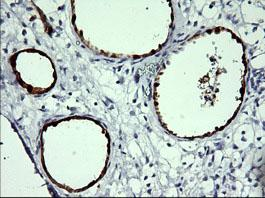 Immunohistochemistry (Formalin/PFA-fixed paraffin-embedded sections) - Anti-Indoleamine 2, 3-dioxygenase antibody [OTI1A3] (ab156787)