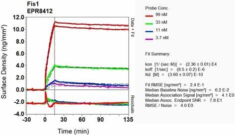 OI-RD Scanning - Anti-TTC11/FIS1 antibody [EPR8412] (ab156865)