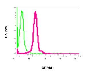 Flow Cytometry - Anti-ADRM1/ARM-1 antibody [EPR11449(B)] (ab157185)