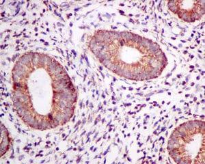 Immunohistochemistry (Formalin/PFA-fixed paraffin-embedded sections) - Anti-TPST2 antibody [EPR10569] (ab157191)
