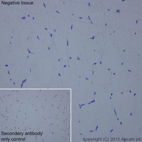 Immunohistochemistry (Formalin/PFA-fixed paraffin-embedded sections) - Anti-HLA-DPB1 antibody [EPR11226] (ab157210)