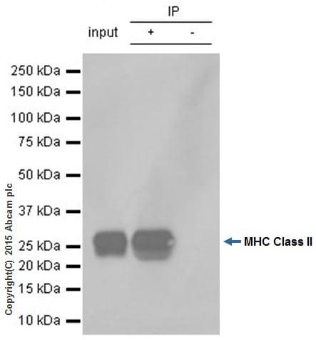 Immunoprecipitation - Anti-HLA-DPB1 antibody [EPR11226] (ab157210)