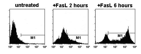 Flow Cytometry - Recombinant Human Annexin V/ANXA5 protein (FITC) (ab157599)