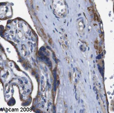 Immunohistochemistry (Formalin/PFA-fixed paraffin-embedded sections) - Anti-Cyclophilin B antibody (ab16045)