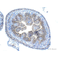 Immunohistochemistry (Formalin/PFA-fixed paraffin-embedded sections) - Anti-beta Catenin antibody (ab16051)