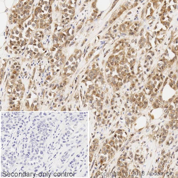 Immunohistochemistry (Formalin/PFA-fixed paraffin-embedded sections) - Anti-BRCA1 antibody [MS13] (ab16781)